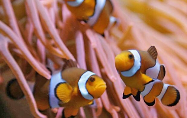 Visita el acuario de O Grove desde 4€ ¡Un plan familiar diferente!