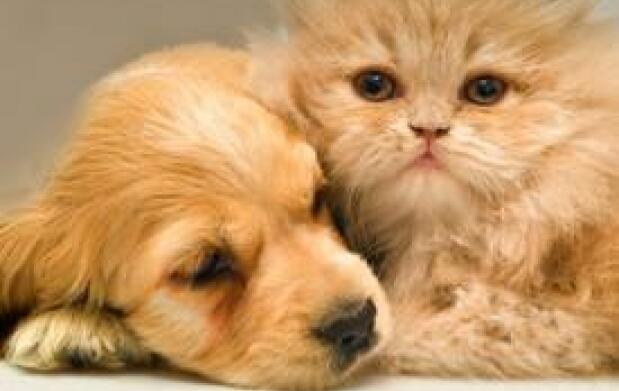 Vacuna y chequeo veterinario